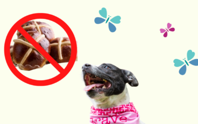 Easter toxins for pets